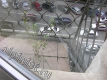 Такие кусты выросли на полу балкона из потрескавшейся расшивки между плитками, которыми пол был облицован.