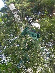 Применяя технику промышленного альпинизма, наш верхолаз спилил верхнюю часть дерева, уже спиленные части мы спускали с помощью веревки, которую пропустили через специальный блок, установленный нами на рядом стоящем дереве.