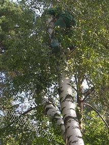 Наш альпинист начинает спускать верхнюю часть дерева с помощью каната, пропущенного для страховки через специальный блок, смонтированном на стоящем рядом дереве.