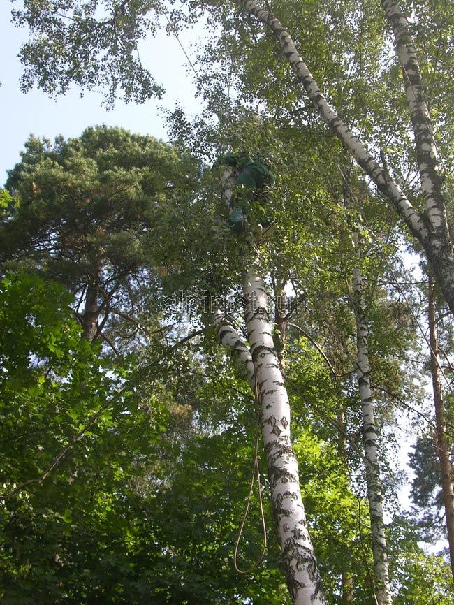спускать часть дерева с помощью каната смонтированном на стоящем рядом дереве