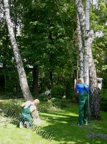 Наш альпинист, используя методы промышленного альпинизма, обвязал верхнюю часть дерева, а другой специалист держит канат, страхующий ствол дерева на время спила нижней части.