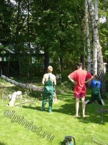 На данной фотографии видно, как спиленное дерево мы опустили вниз на землю, перед спилом нижней части наш альпинист обвязал верх ствола канатом, чтобы подстраховать, и контролируемо опустить его.