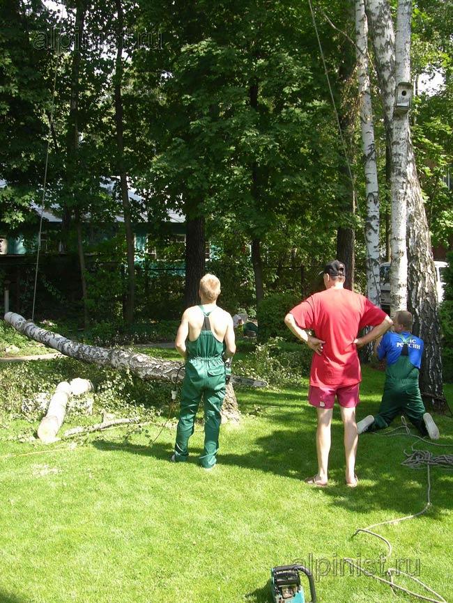 на данной фотографии видно, как спиленное дерево мы опустили вниз на землю