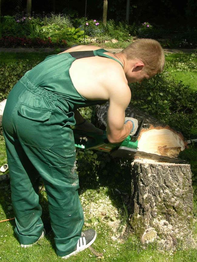 наш специалист подпиливает нижнюю часть дерева, используя бензопилу