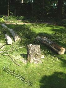 А здесь, Вы видите то, что осталось от 15-ти метровой березы на дачном участке в Московской области. Наши специалисты, применяя технику промышленного альпинизма, спиливали дерево по частям, обвязывая каждую часть ствола канатом и спуская ее на землю.