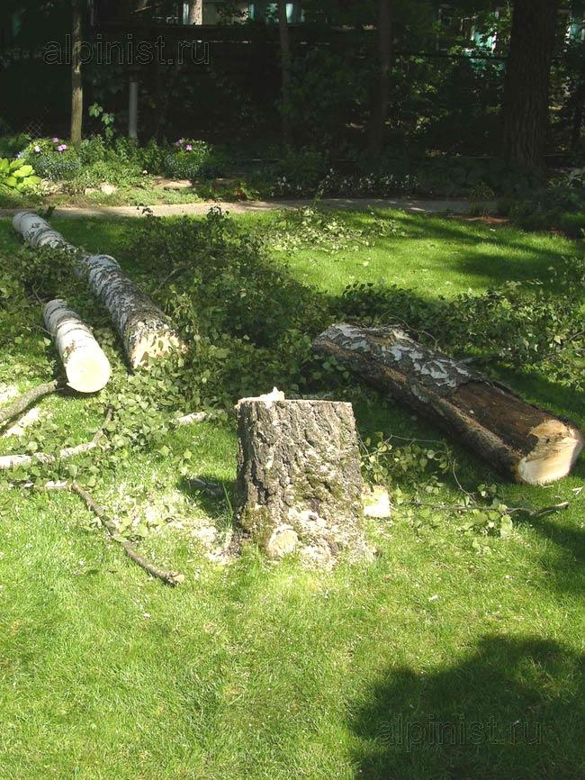 наши специалисты спиливали дерево по частям, обвязывая каждую часть ствола канатом и спуская ее на землю