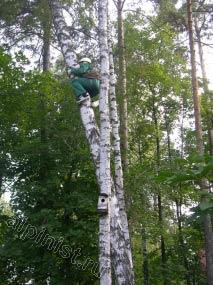 Наш альпинист, применяя технику промышленного альпинизма, лезет вверх на дерево, чтобы потом с него спуститься на наклоненное дерево и спиливать его по частям, начиная с самого верха.