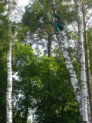 Используя приемы промышленного альпинизма, наш альпинист залезает на дерево, чтобы с него спуститься на другое, опасно наклоненное дерево и начать спил частями, начиная с верхушки.