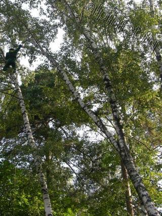 Сейчас наш промышленный альпинист закрепил к дереву страховочную веревку, благодаря которой спустился на другое опасно наклоненное дерево, для того чтобы безопасно начать спил верхней части этого дерева.